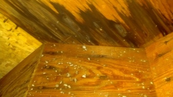 Water intrusion from above has damaged the plywood substrate.